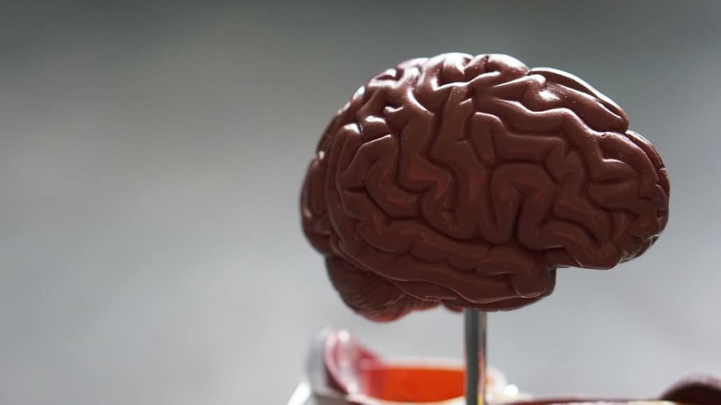 A model brain on a metal stand