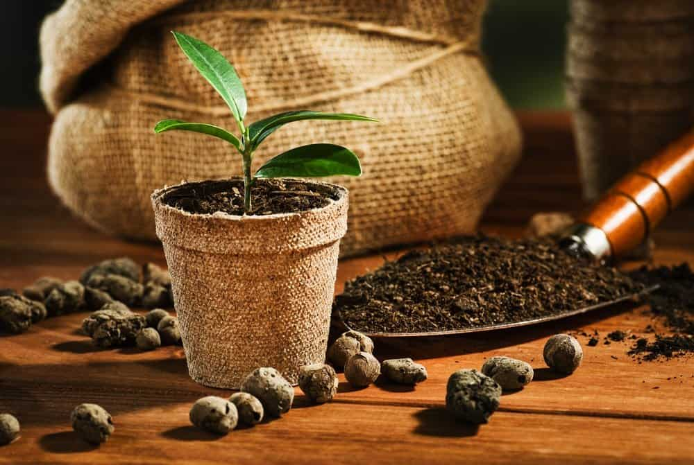 a potted plants next to a small shovel with soil
